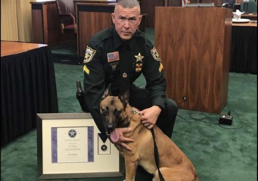 """Palm Beach County Sheriff's Office K-9 Casper received a """"purple heart"""" for taking a bullet meant for his handler. (Photo: Palm Beach SO)"""