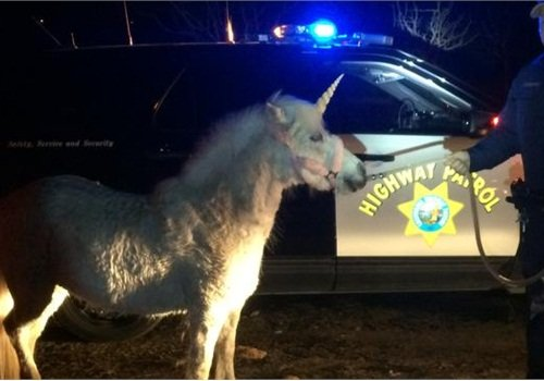 Juliet, the unicorn/shetland pony, was pursued by CHP troopers Wednesday on a roadway near Fresno. (Photo: CHP)
