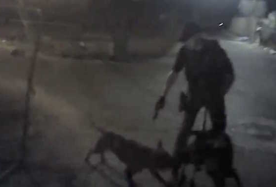 Owner's Claim That Arizona Deputy Unnecessarily Shot Her Dog Refuted by Video