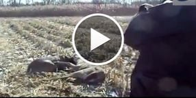Video: Ill. Cop Shoots Antlers To Separate Deer