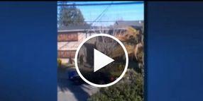 Video: Calif. Cop Killer Wore Body Armor