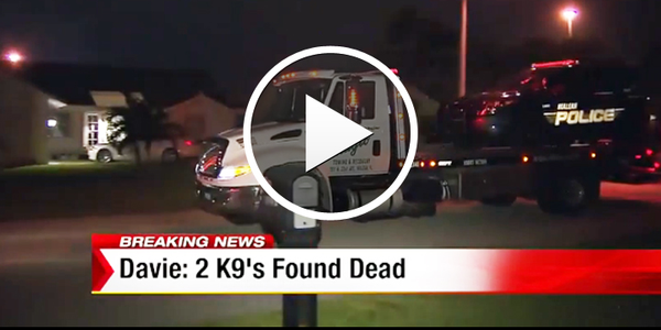 Video: 2 K-9s Die in Vehicle at Florida Officer's Home