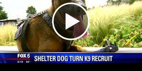 Video: Former Shelter Dog Joins Va. Police K-9 Unit