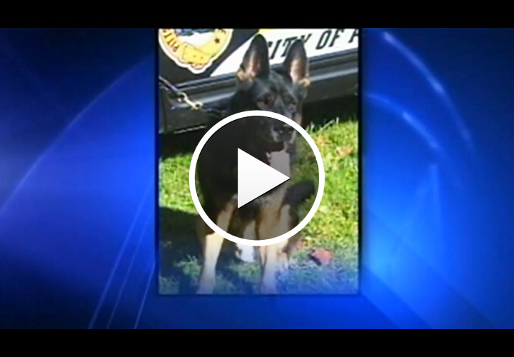 Video: Up To 44 Years for Man in Fatal Pittsburgh Police Dog Stabbing
