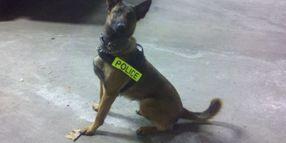 Ill. Police Dog Killed In Code 3 Crash