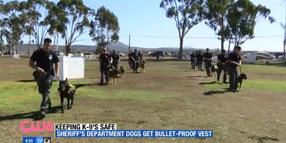 San Diego Sheriff's K-9s Get Body Armor