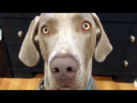 Utah Deputies to Train in Canine Interactions