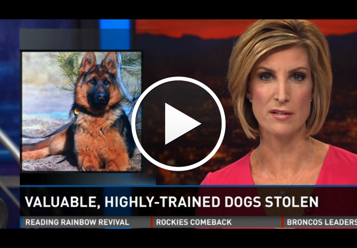 Video: 3 Law Enforcement Trained Dogs Stolen From Facility
