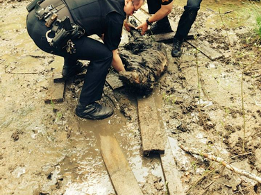 Sergeant Mike Martin and Patrol Officer Mike Kushner rescuing a mud-trapped dog.
