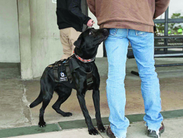 Experts say it's one thing for a dog to find planted explosives in a building, which are giving...
