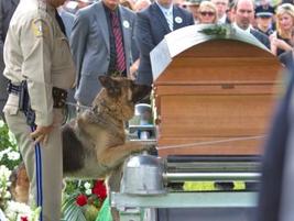 Officer Ellis' K-9, Figo, pays his respects at his handler's casket.