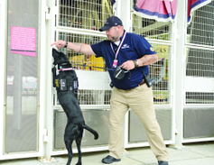 Person-Borne Explosive Detection Dogs can find planted explosives or follow a bomber walking...