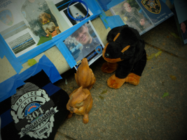 Images from Police Week 2017