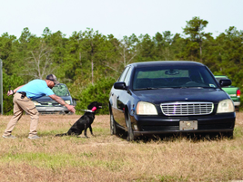 K2 Solutions is one of the largest providers of explosive detection dogs in the United States....