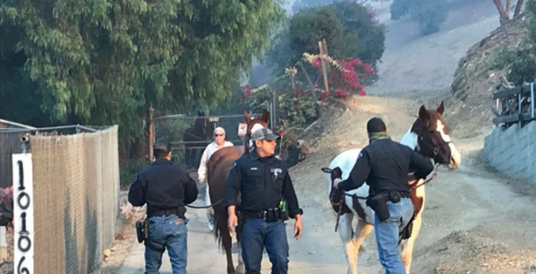 LAPD Mounted Unit officers rescue a horse from the Creek Fire. (Photo: Officer Gary Copeland/LAPD)