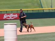 K-9 Maverick and Officer Vusovich from the Scottsdale (AZ) Police Department (Photo: Leslie...