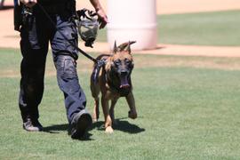 Desert Dog Regional Police K-9 Trials