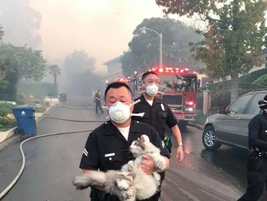 LAPD Officer Tae Kim rescues a cat in Bel-Air. The cat was reunited with its owner. (Photo:...