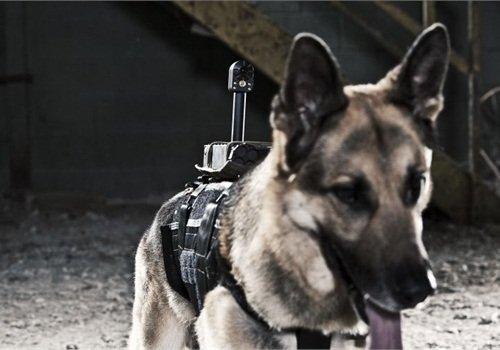 Photo: Tactical Electronics