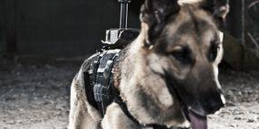 K-9 Back-Mounted Camera
