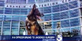Shot Calif. Police Dog Bruno Needs More Surgery