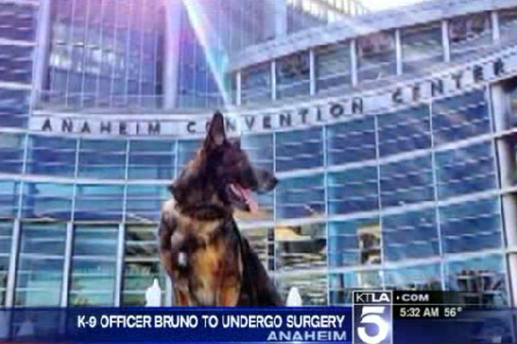 Shot Calif. Police Dog Bruno Needs More Surgery