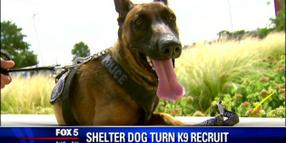 Former Shelter Dog Joins Va. Police K-9 Unit