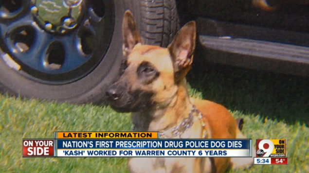 First Dog Certified to Sniff Out Prescription Drugs Has Died