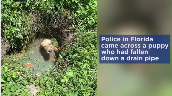Florida Police Rescue Puppy Trapped in Drain Pipe