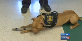 Unadoptable Dog Now Ohio's First Official Police Pit Bull