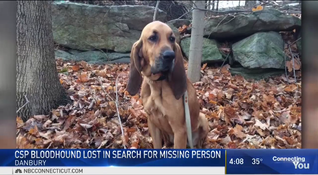 CT K-9 Goes Missing During Search for Missing Man