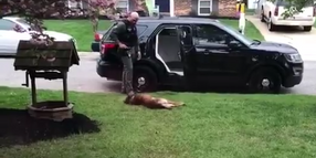 Maryland K-9 Doesn't Want to Go to Work