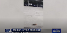 Squirrel Steals Donut from Alaskan Officer