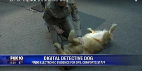 Golden Retriever Joins Arizona DPS to Find Hidden Data, Help Distressed Employees