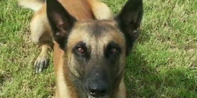 Houston K-9 Put Down After Injuring Leg Chasing Suspect
