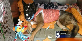 Critically Wounded Calif. K-9 Expected to Survive