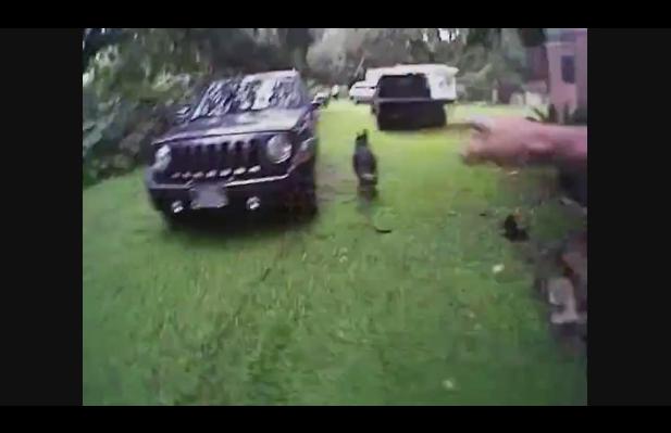Handler's Body Camera Captures FL Sheriff's K-9 in Full Pursuit