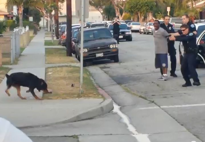 Calif. Officer Shoots Lunging Dog